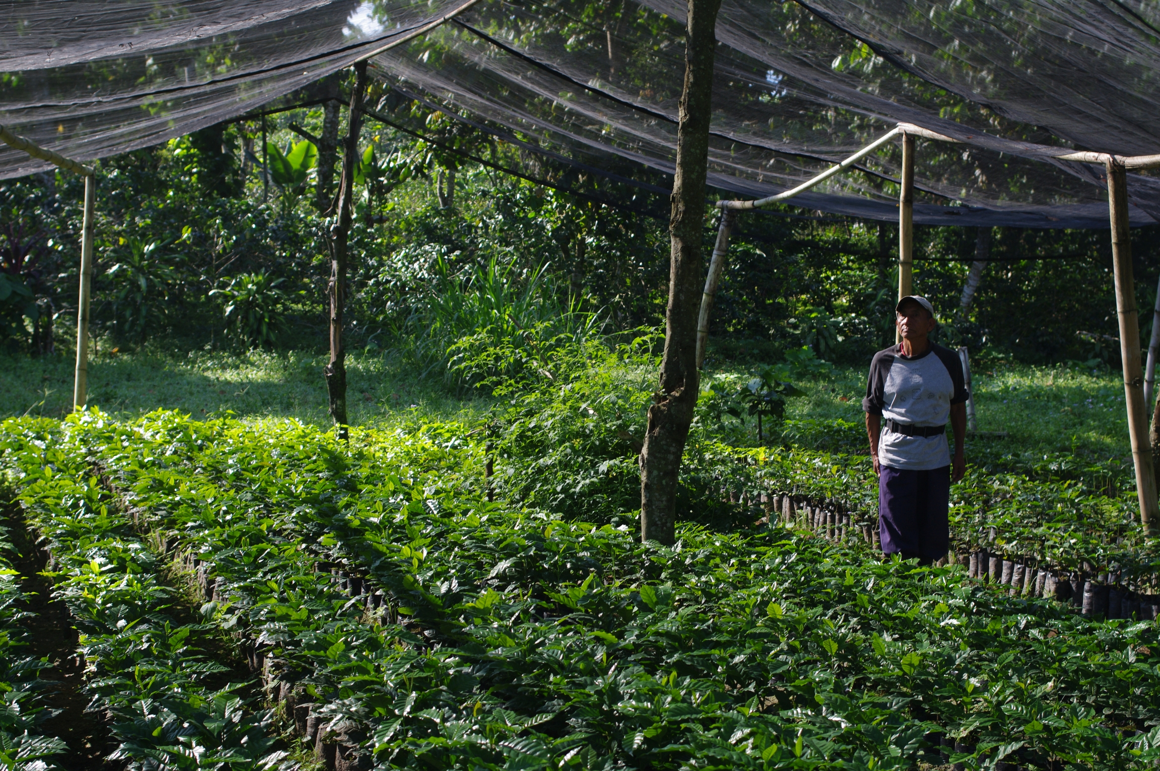Plant nursery funded by LATA Fundation and De la Gente