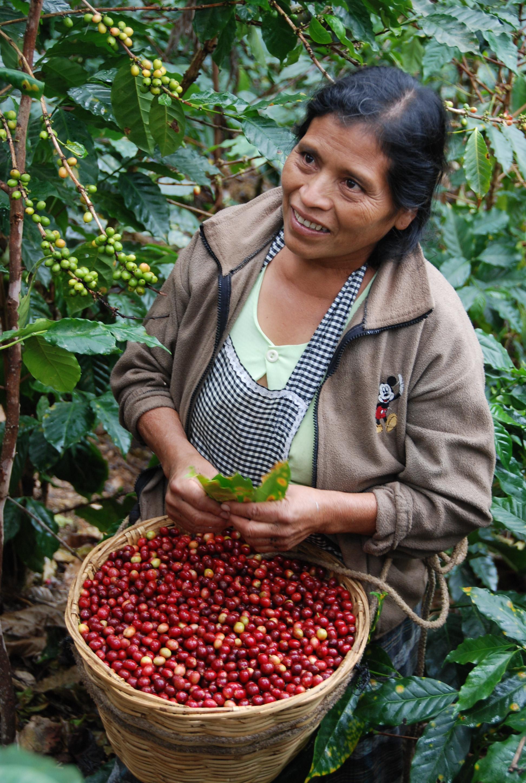 woman carrying bowl of Organic Coffee