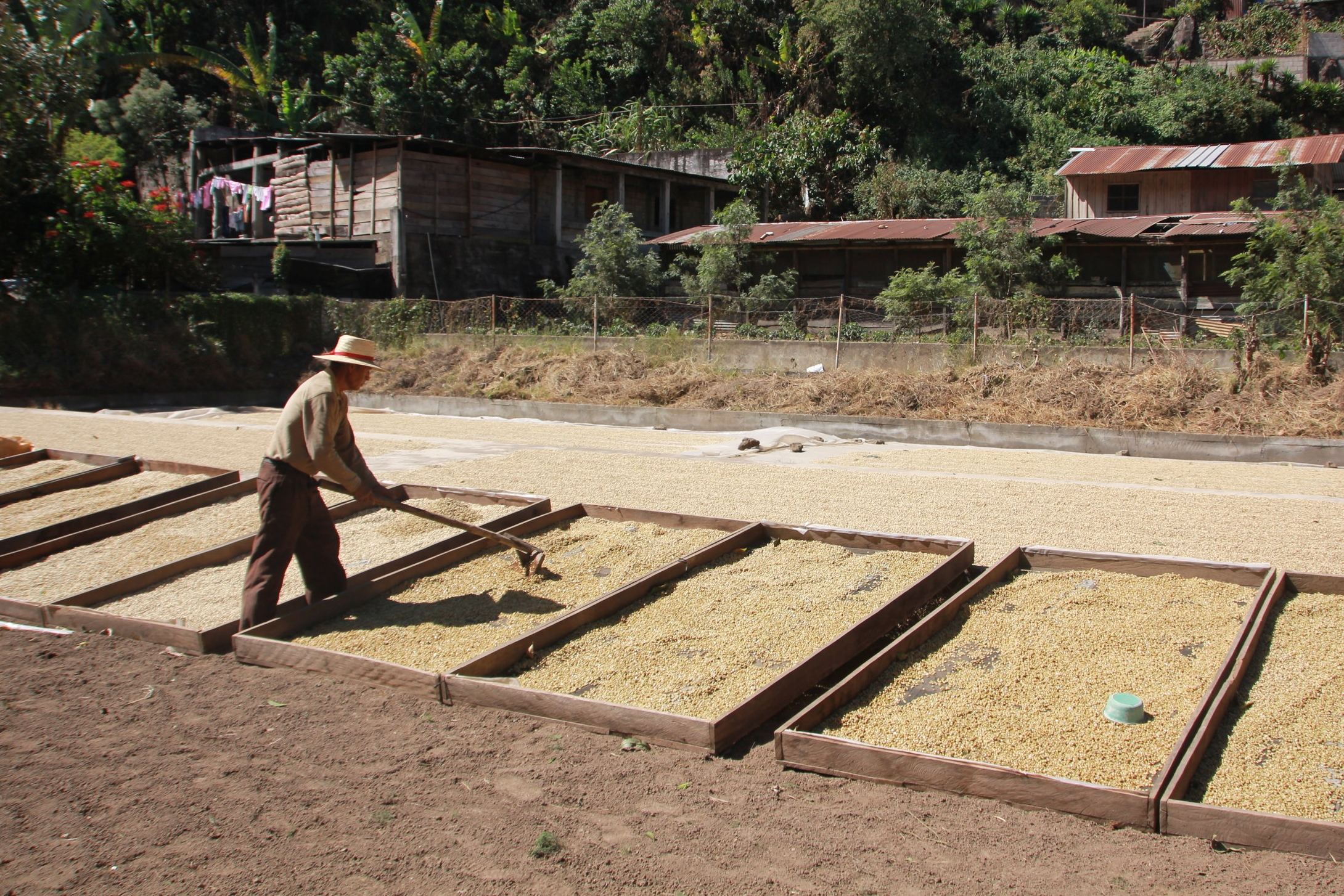Coffee Farmer Lake Atitlan Guatemala