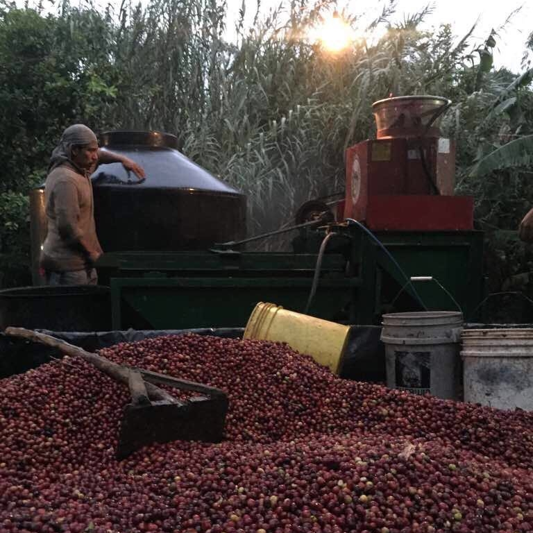 Coffee processing at Ija'tz