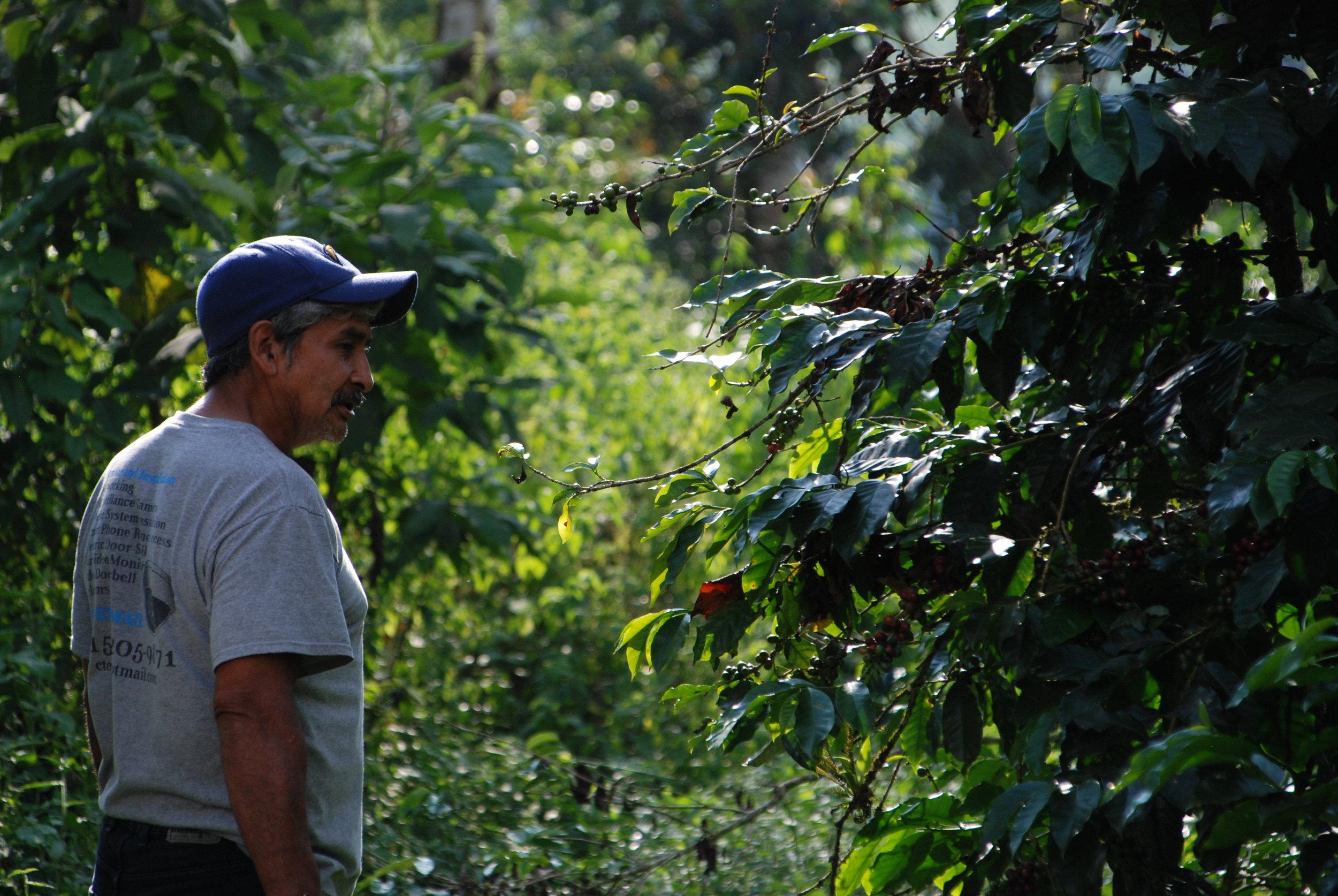Coffee Farmer Guatemala