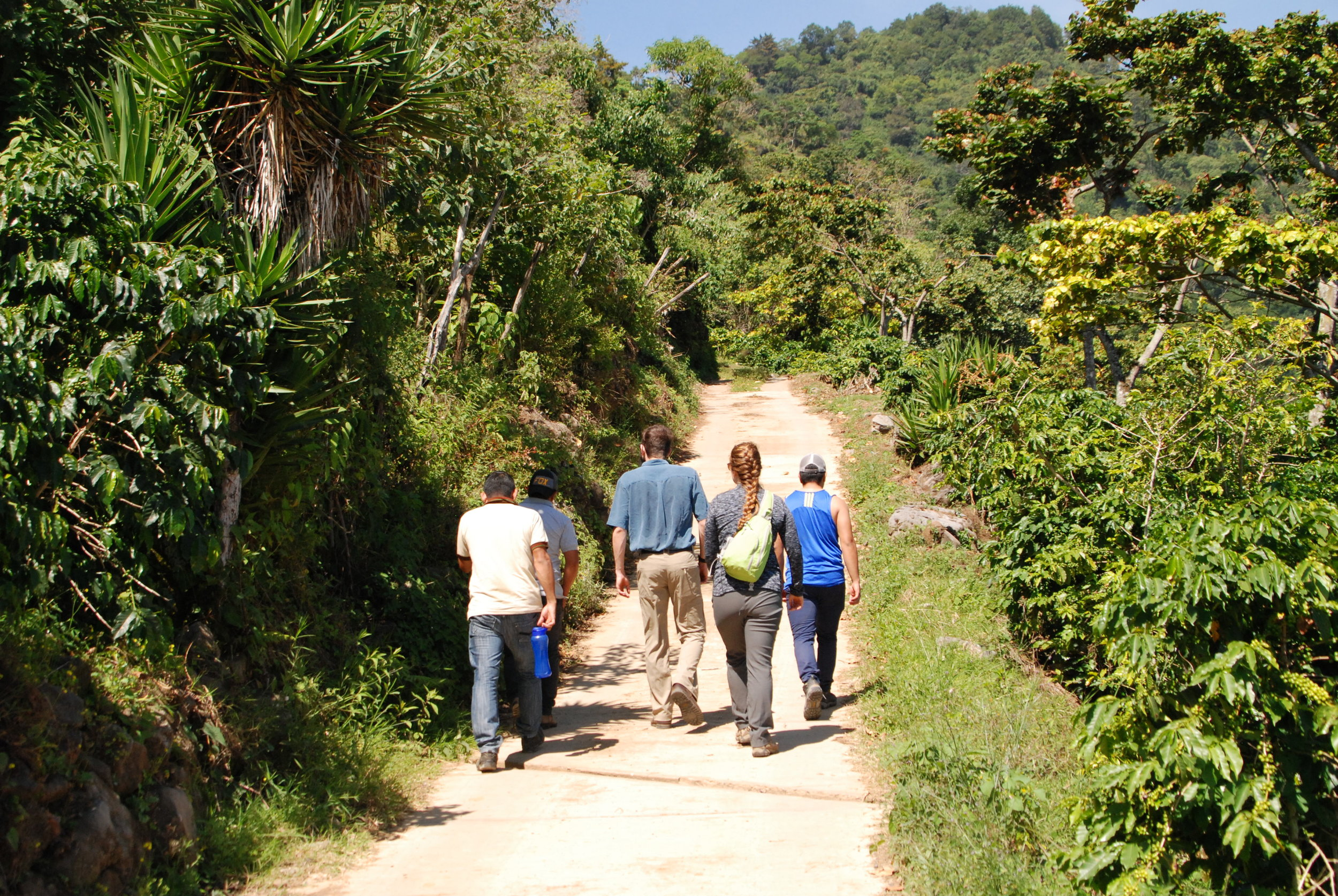 Hiking to the coffee fields.