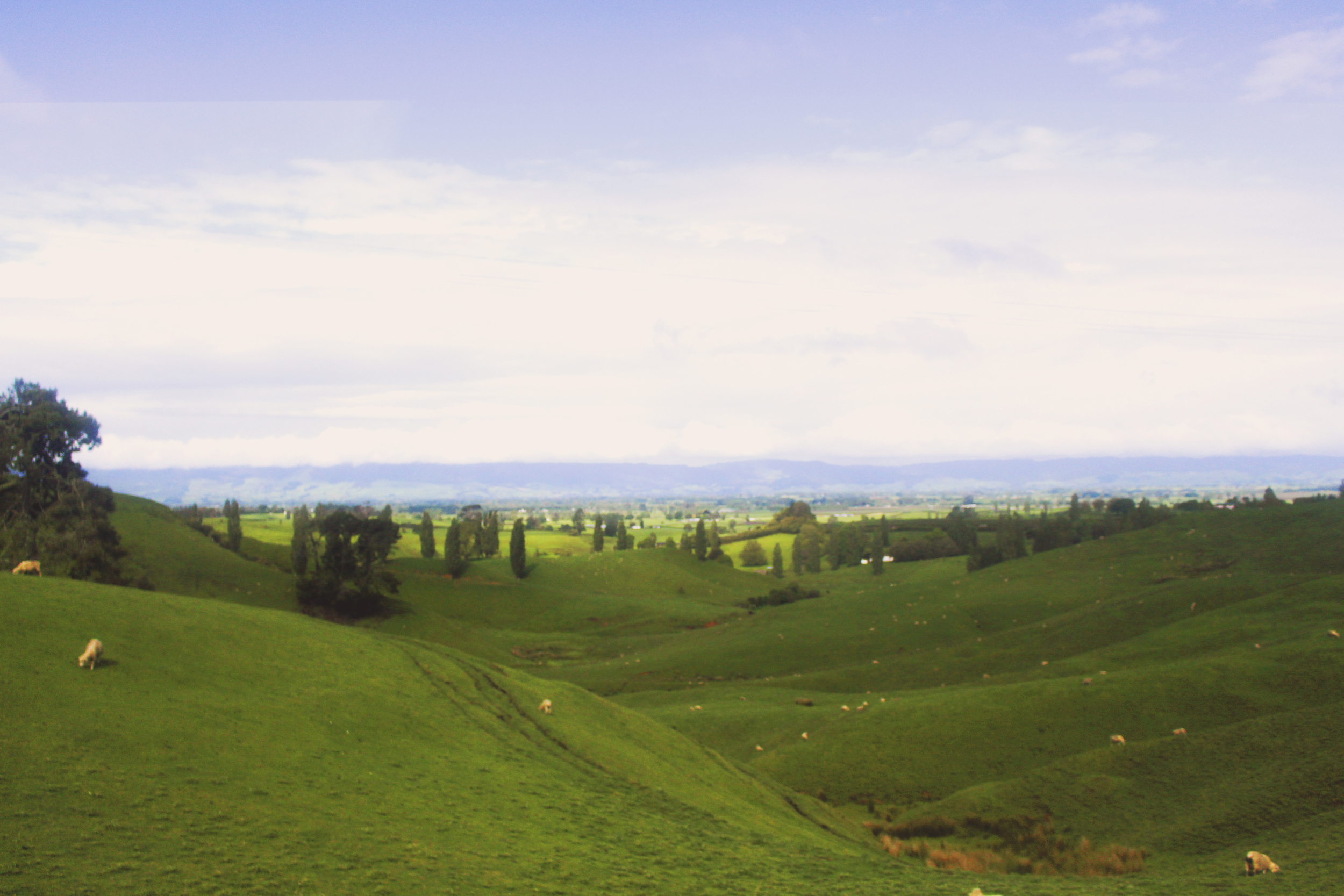 A slightly blurry out-the-bus-window shot of the rolling hills of Matamata, NZ.