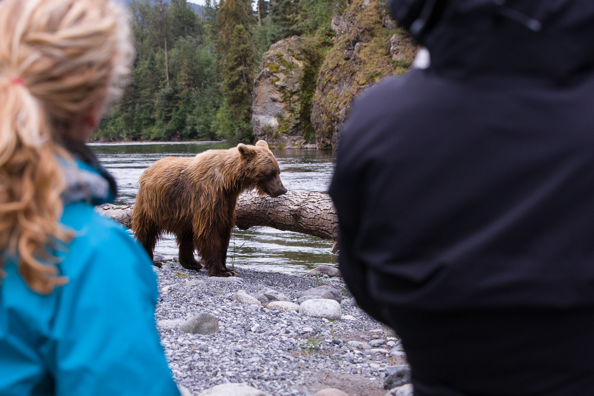 Standing feet away from a Grizzly bear, two travelers are amazed at the sights of the bears being so close. Its only through preparation and knowledge that we deliver on bear behavior that you would be comfortable to stand this close. Its that education and preparation on our teams behalf that allows you to be in the right position to get great photos.