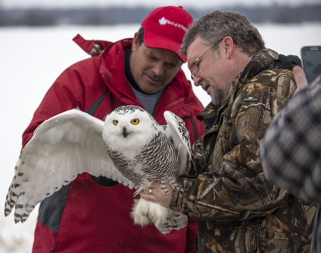 Here I am spending time with Nigel. He was tagging snowy owls. I was learning about their migratory patterns, the sex, age, feeding patterns and skeletal and feather structures.