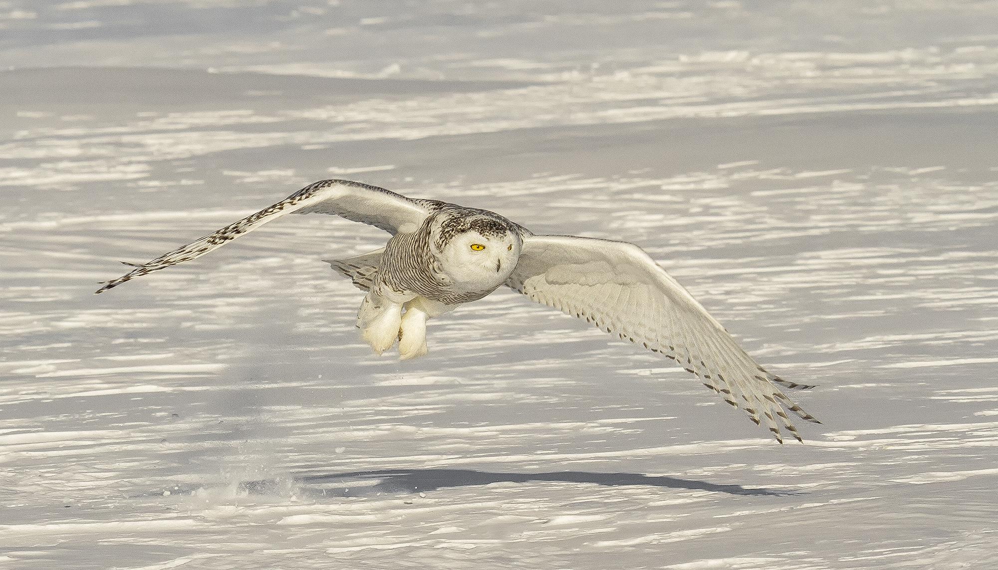 taking flight.jpg