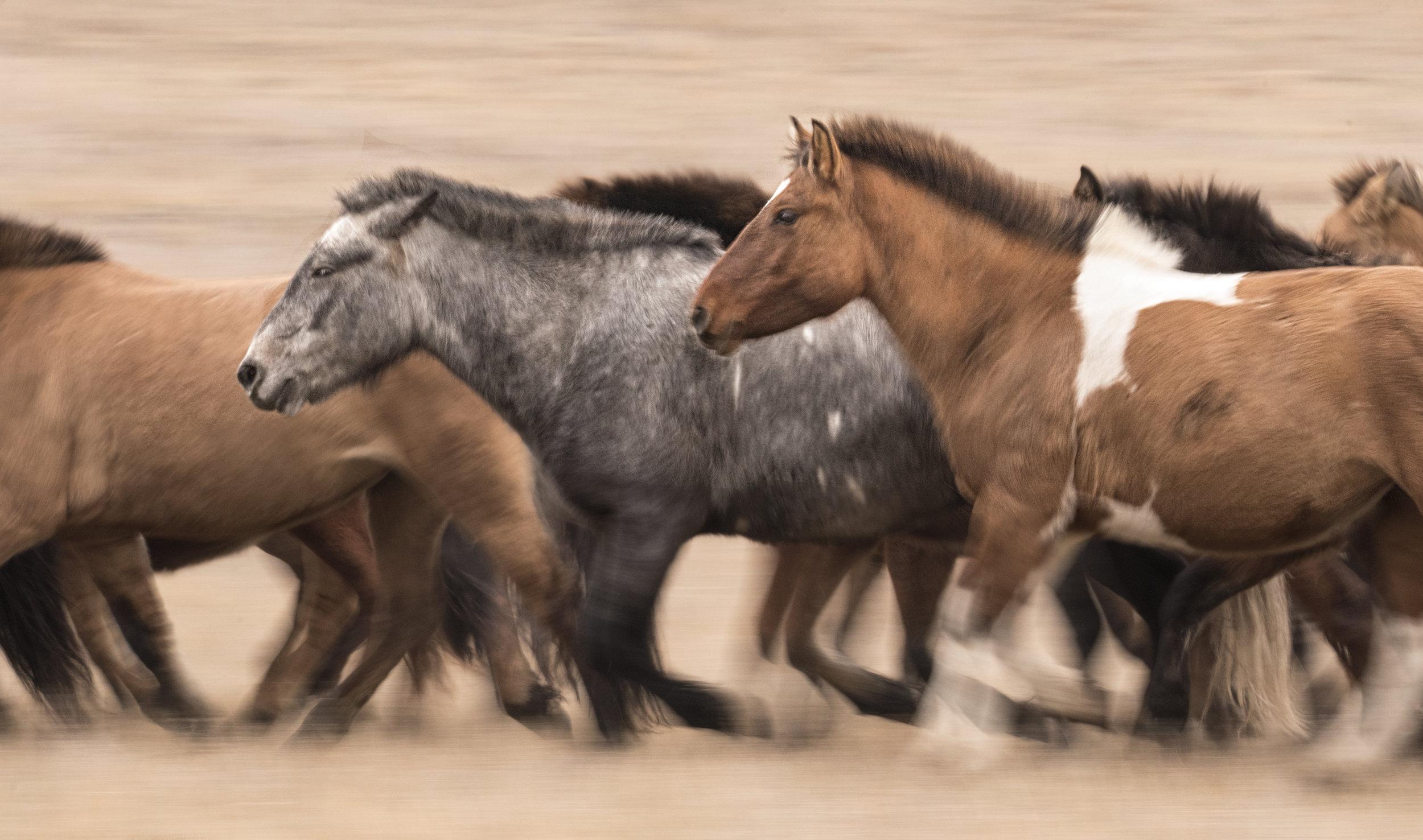 mongolian horse_motion blur_hustai.jpg