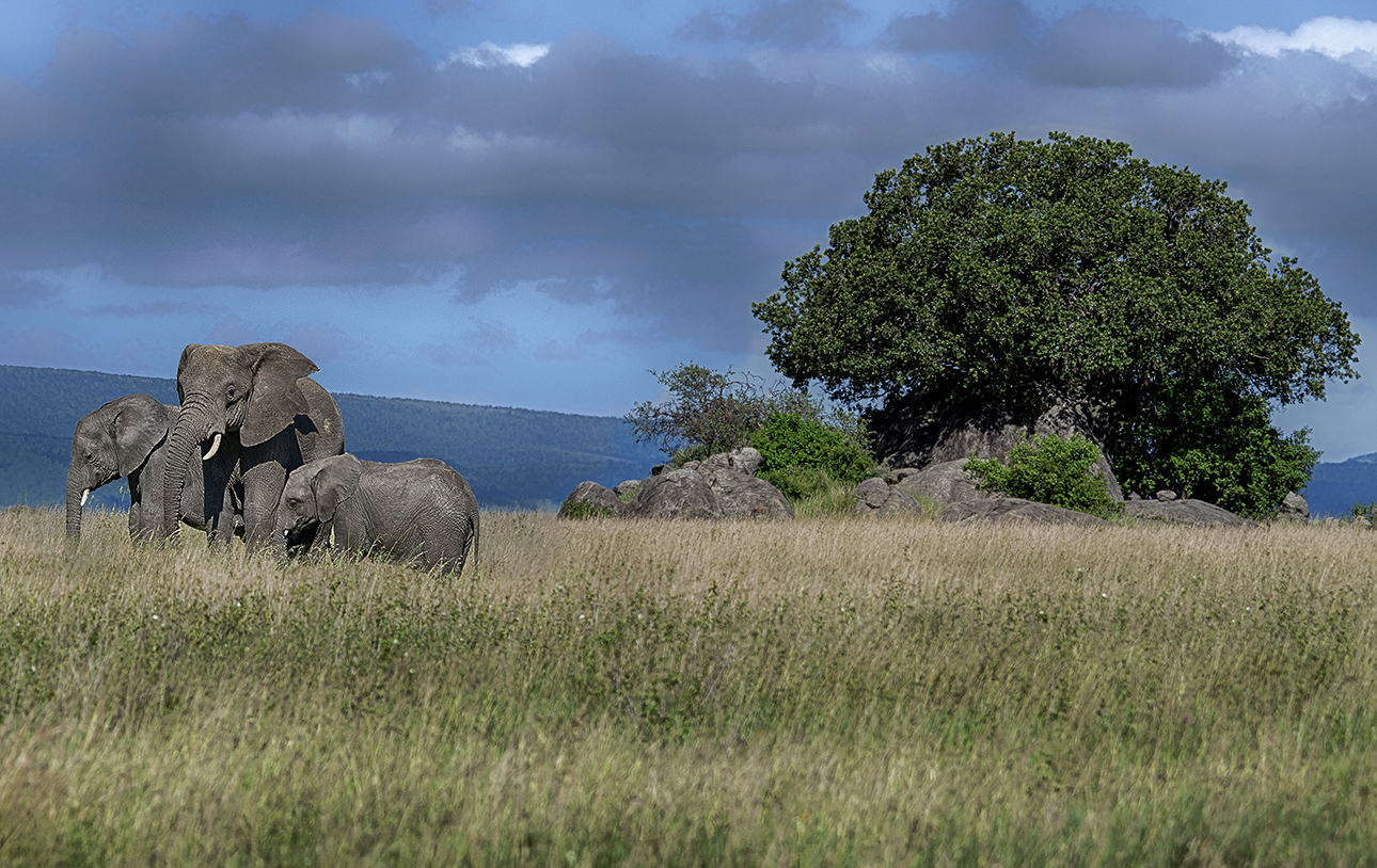 elephant trio.jpg