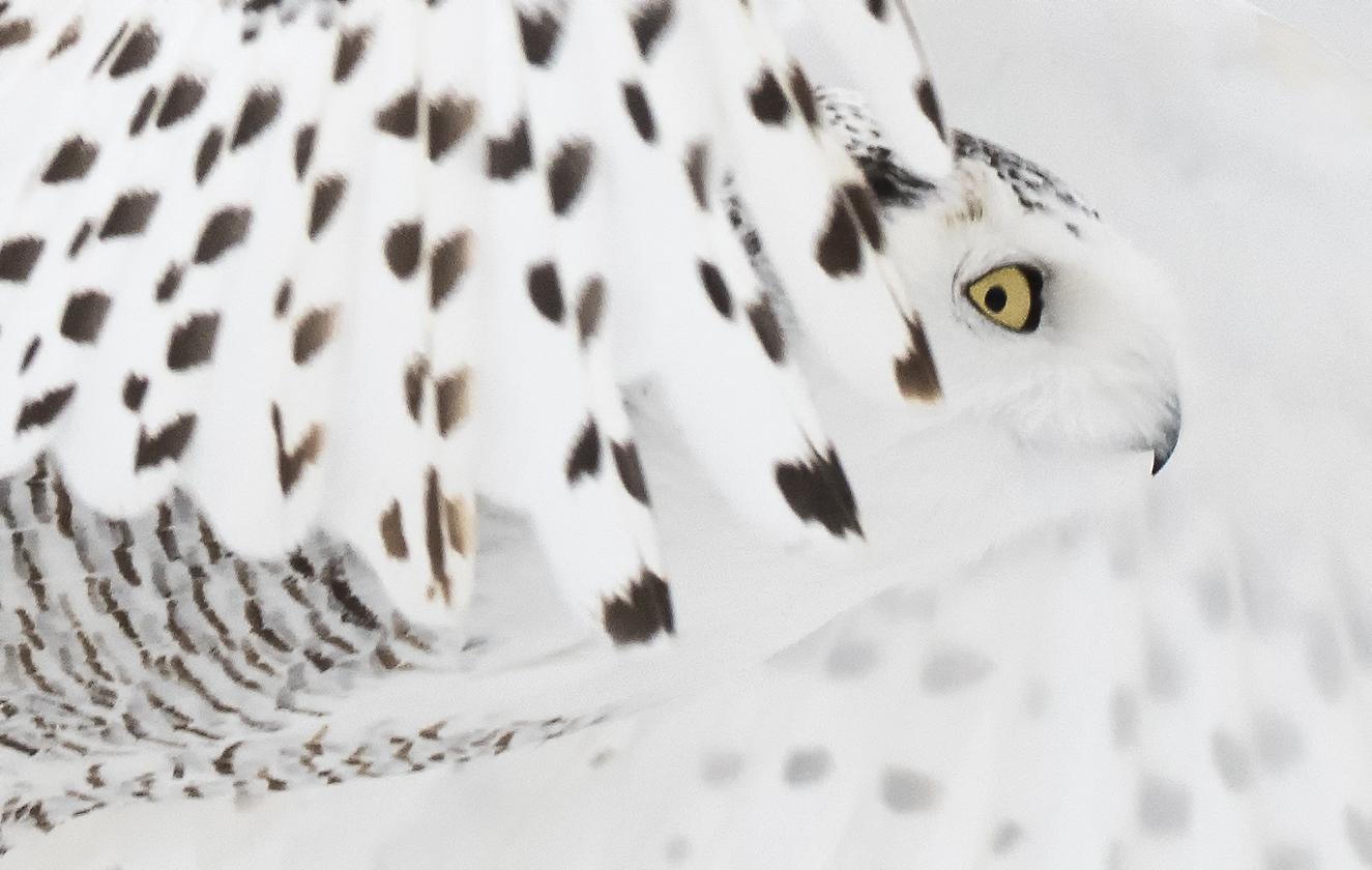 snowy eye.jpg