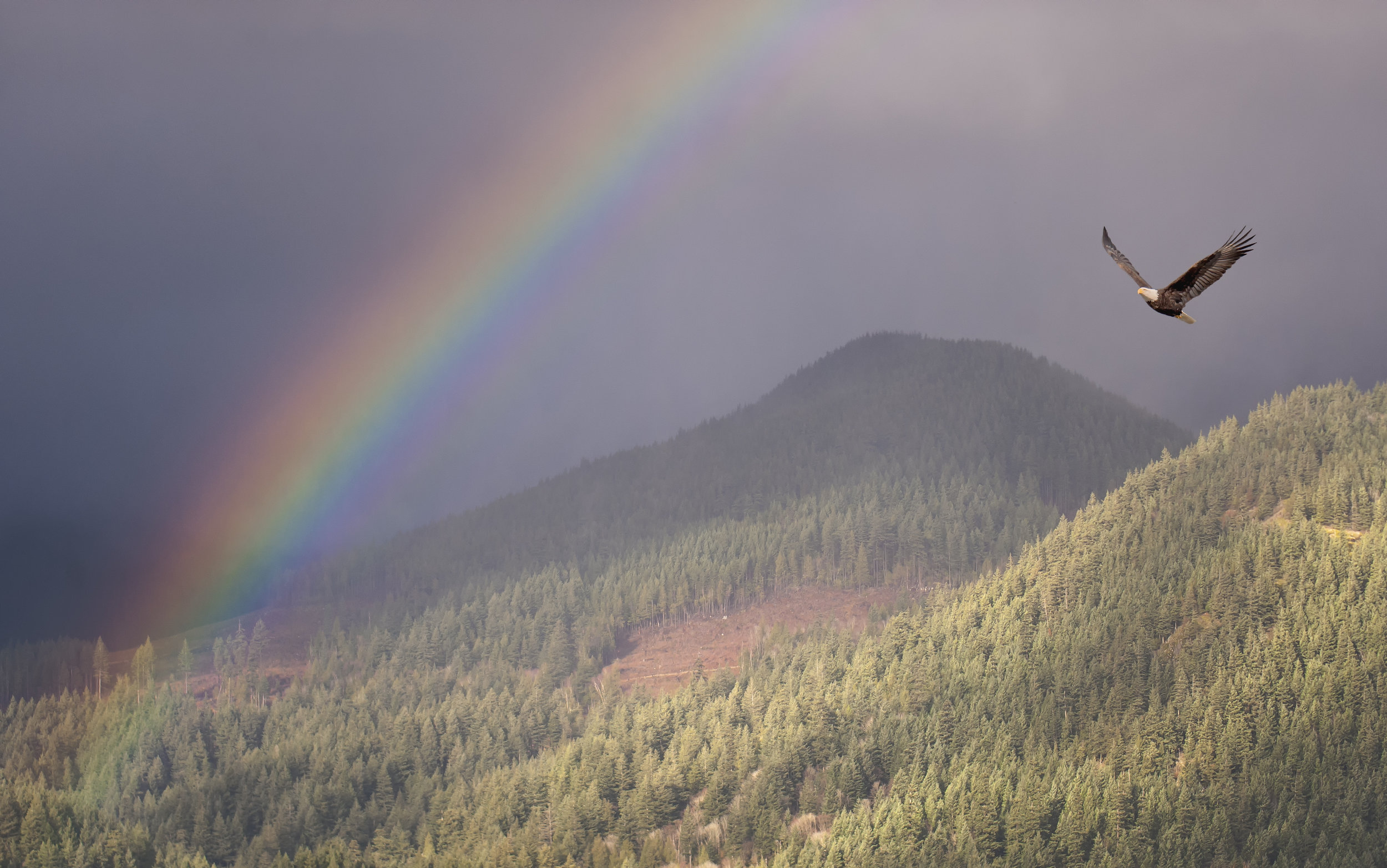 eagle in rainbow.jpg