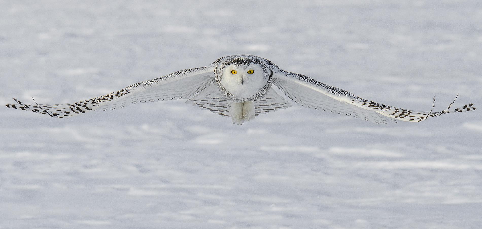 snowy flight.jpg