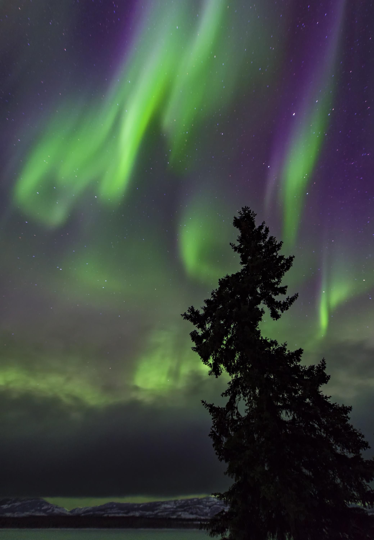 northern lights in the yukon.jpg