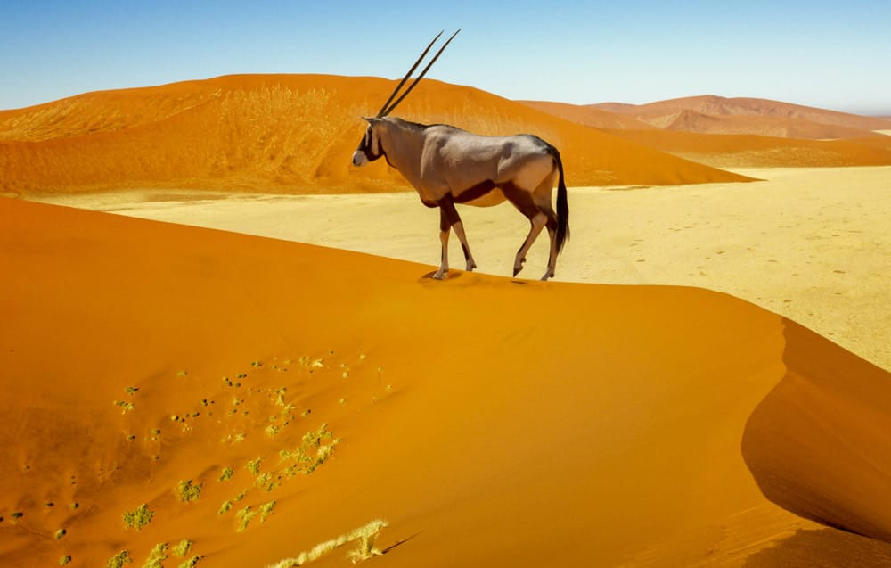 namibia-feature-image.jpg