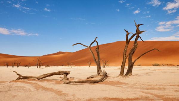 petrified-trees-namibia.jpg