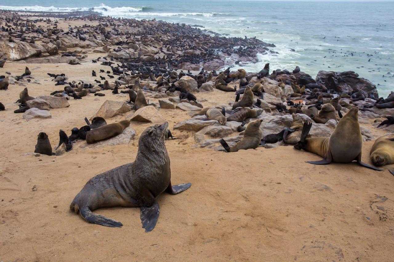 sea-lion-colny-skeleton-coast-namibia.jpg