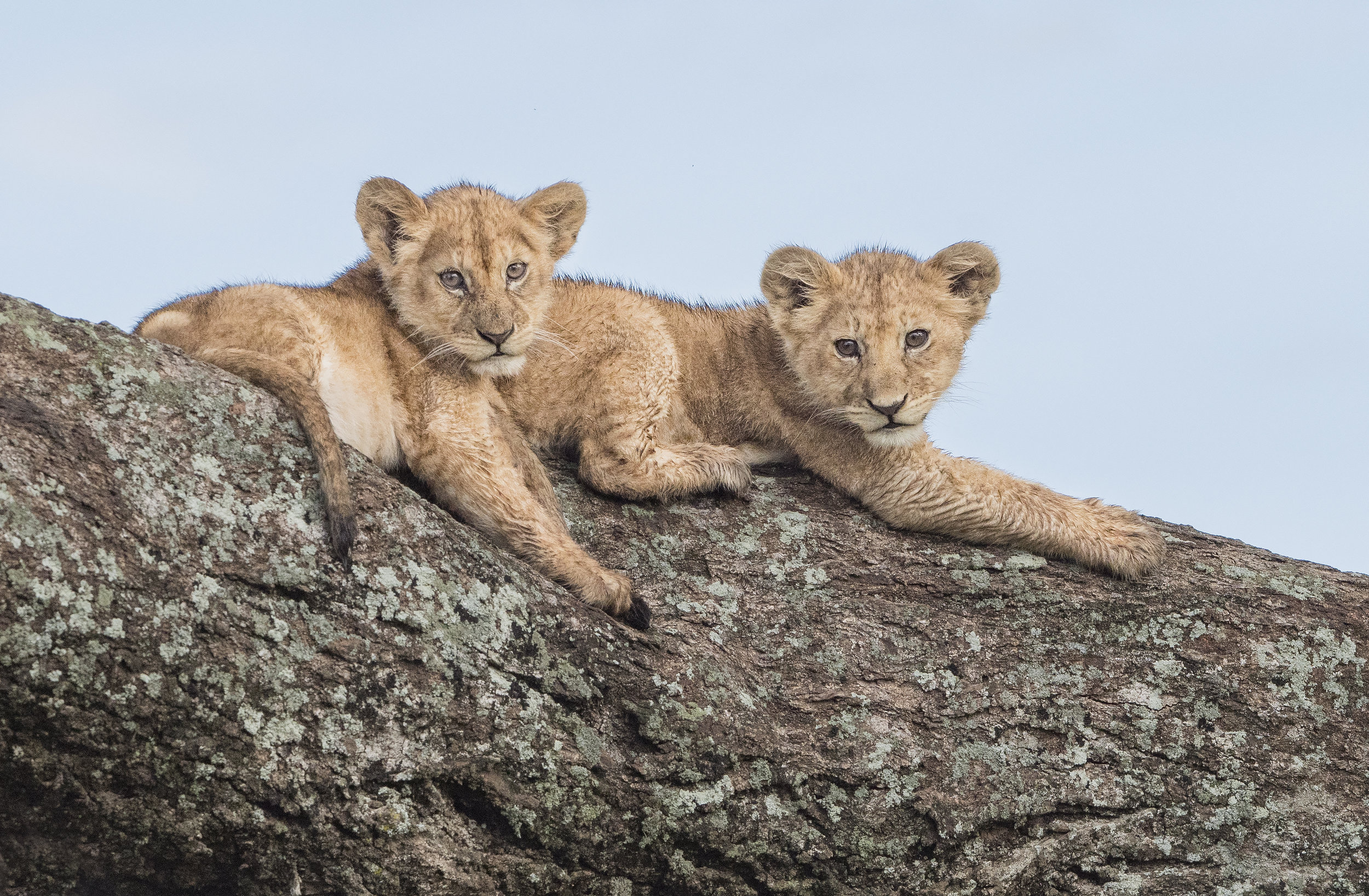 two cubs_LUMIX.jpg