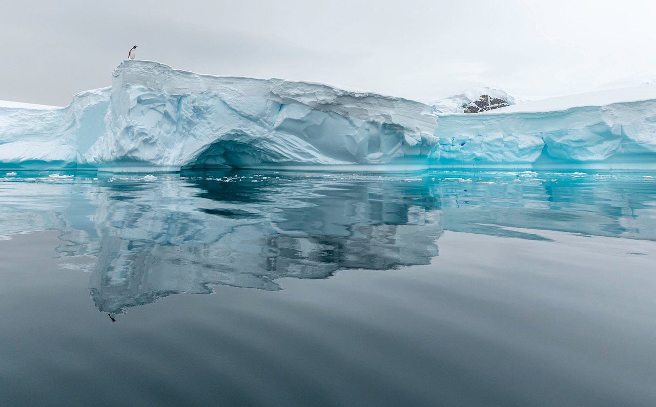 antarctica ice and penguin.jpeg