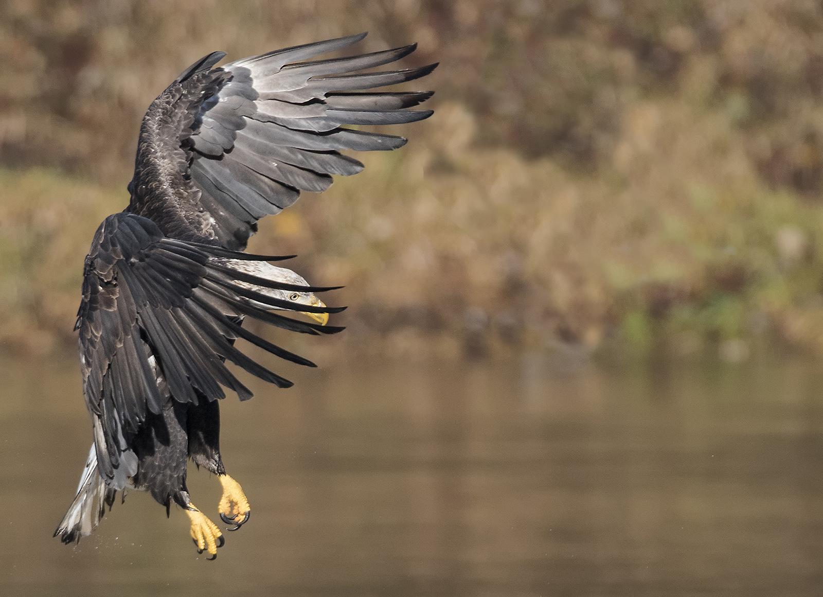 i+see+the+eye+of+the+bald+eagle+(1).jpg