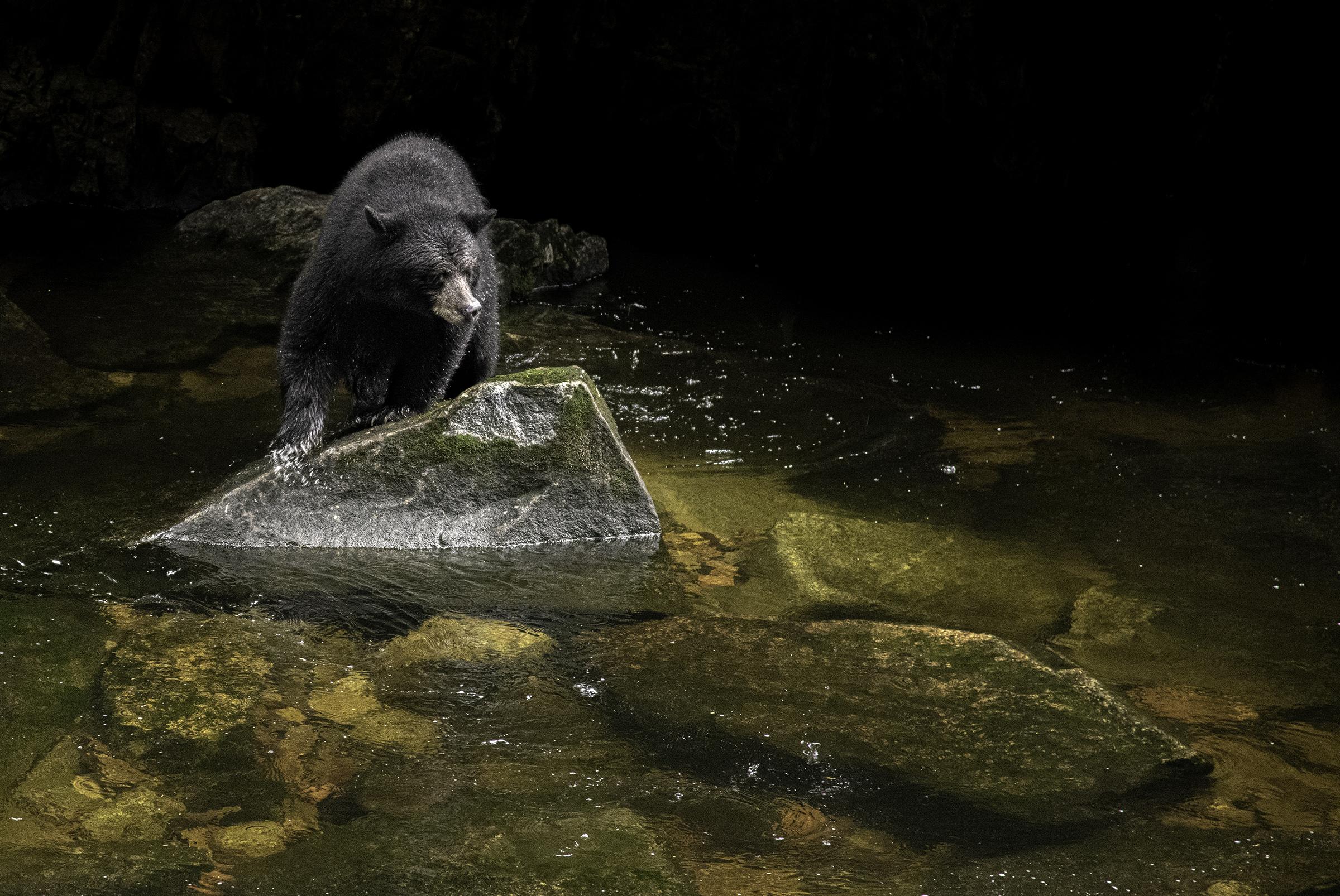 black bear_Spirit bear lodge.jpg