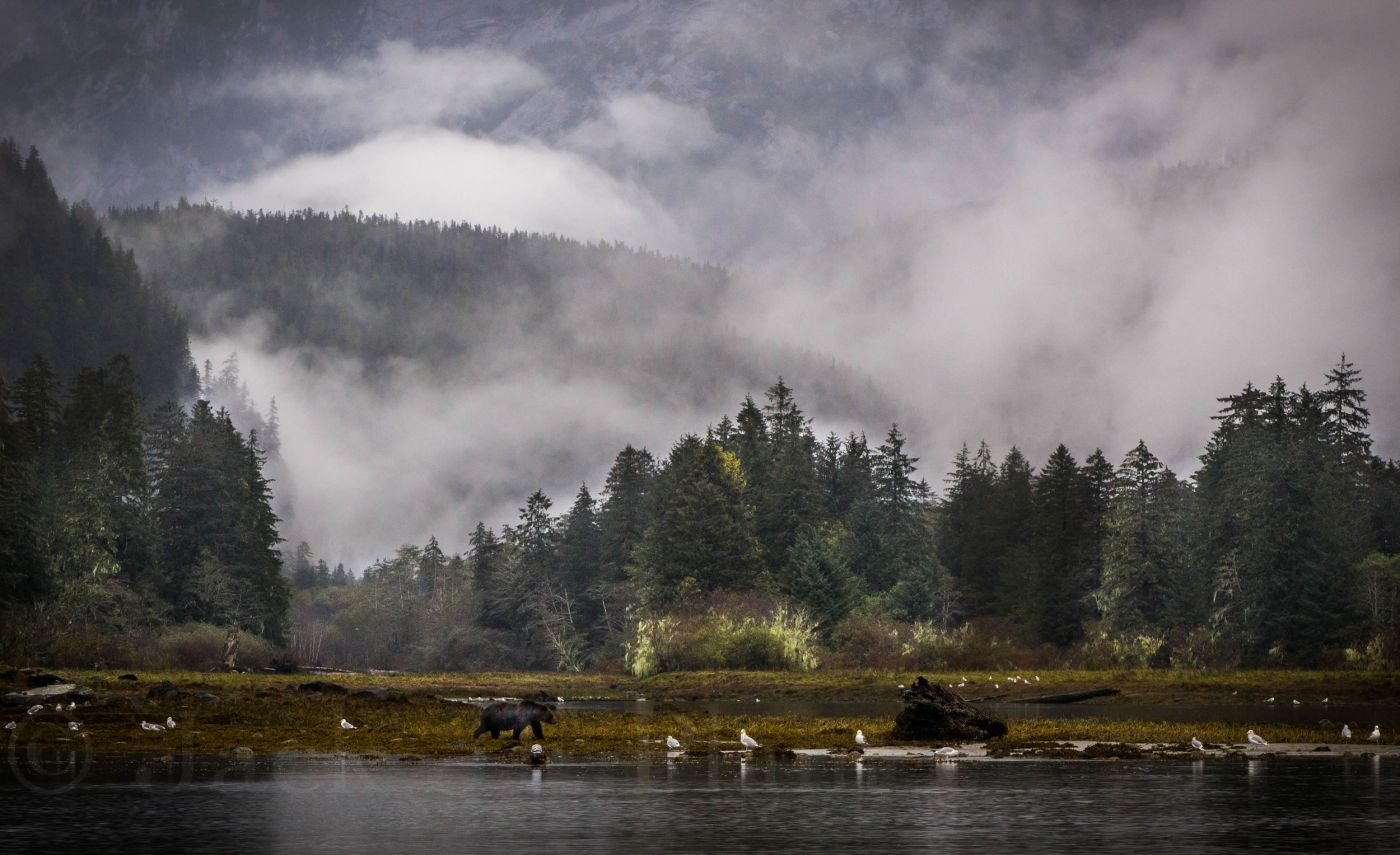 landscape-foggy-mussel-inlet-049.jpg