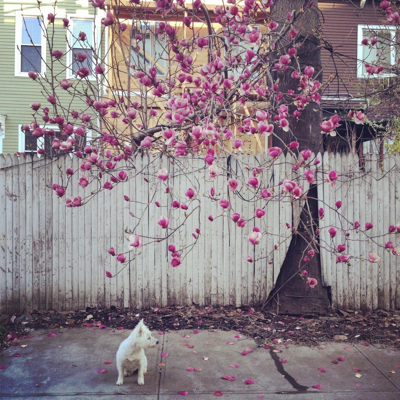 Williamsburg backyard, Photo by Arianne Keegan