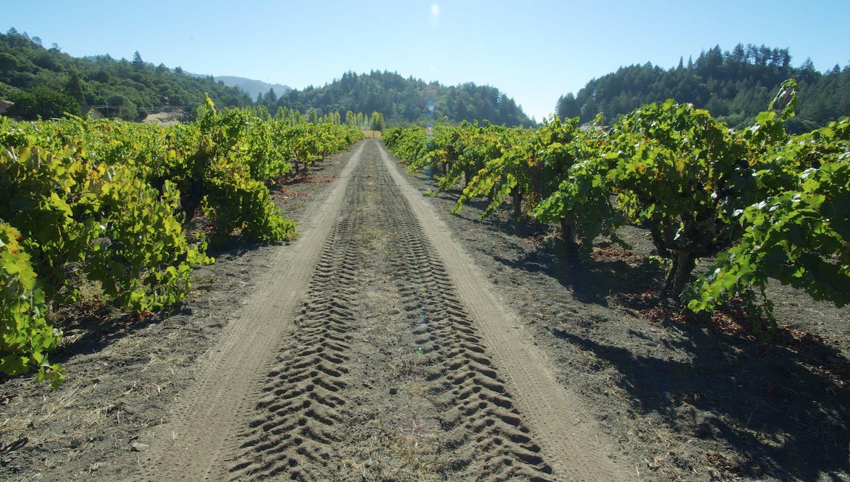 tractor tread.jpg