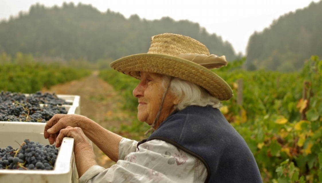 Our Mission - My goal as winemaker is to bring a little restraint to the 'table' - to craft wines that not only taste good now, but will complement your meals and age gracefully. Learn More