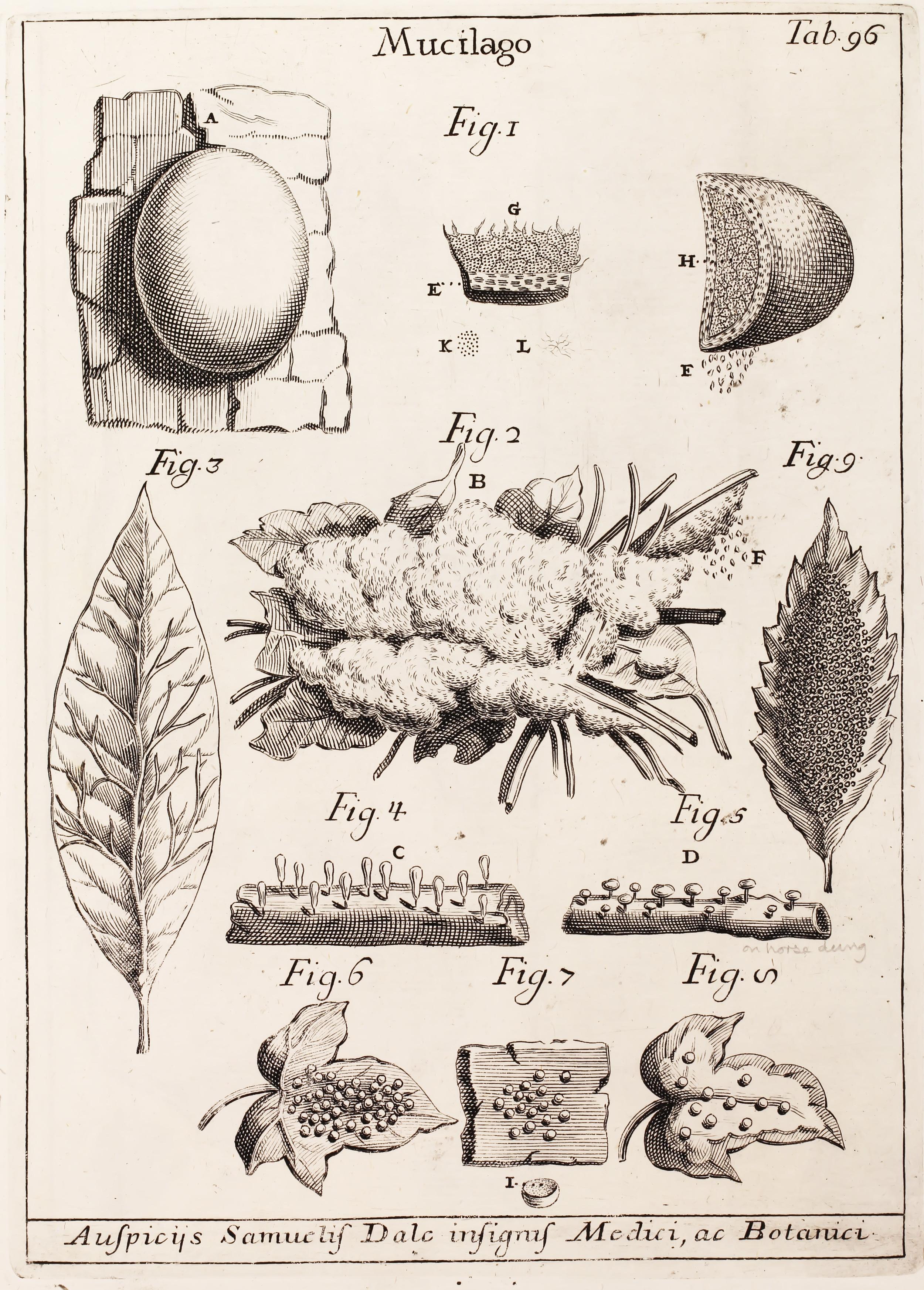 Pier Antonio Micheli, 1729. Pier discovered spore germination. Nobody really cared.