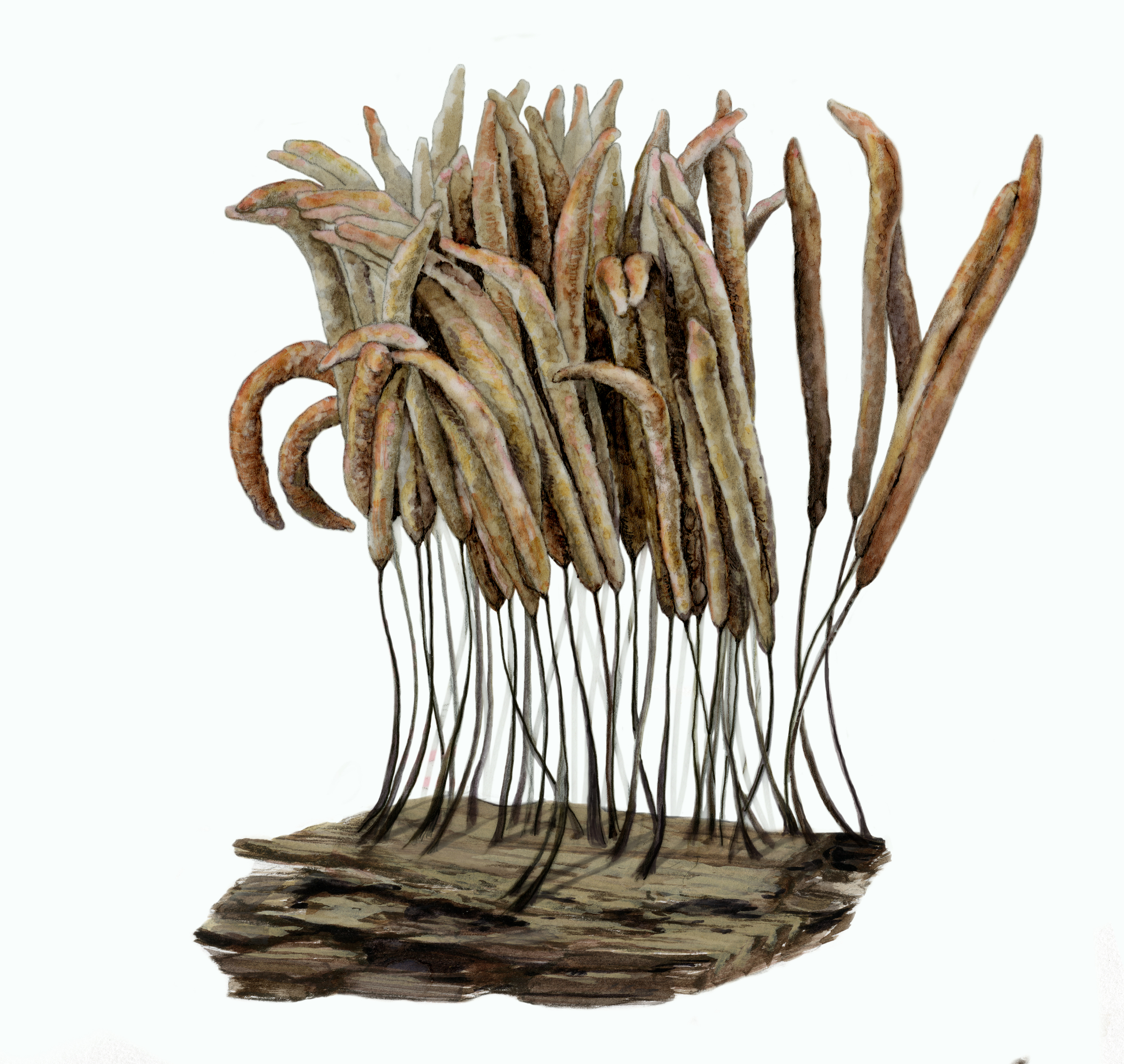Stemonitis axifera  takes 20 hours to form these fruiting bodies. Then, slugs eat them, top down.