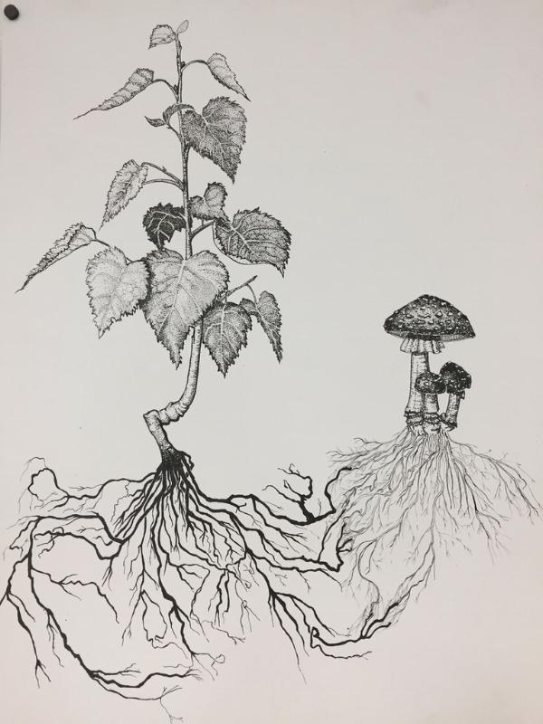 Mycorrhizal symbiosis by Alexa Sharrett