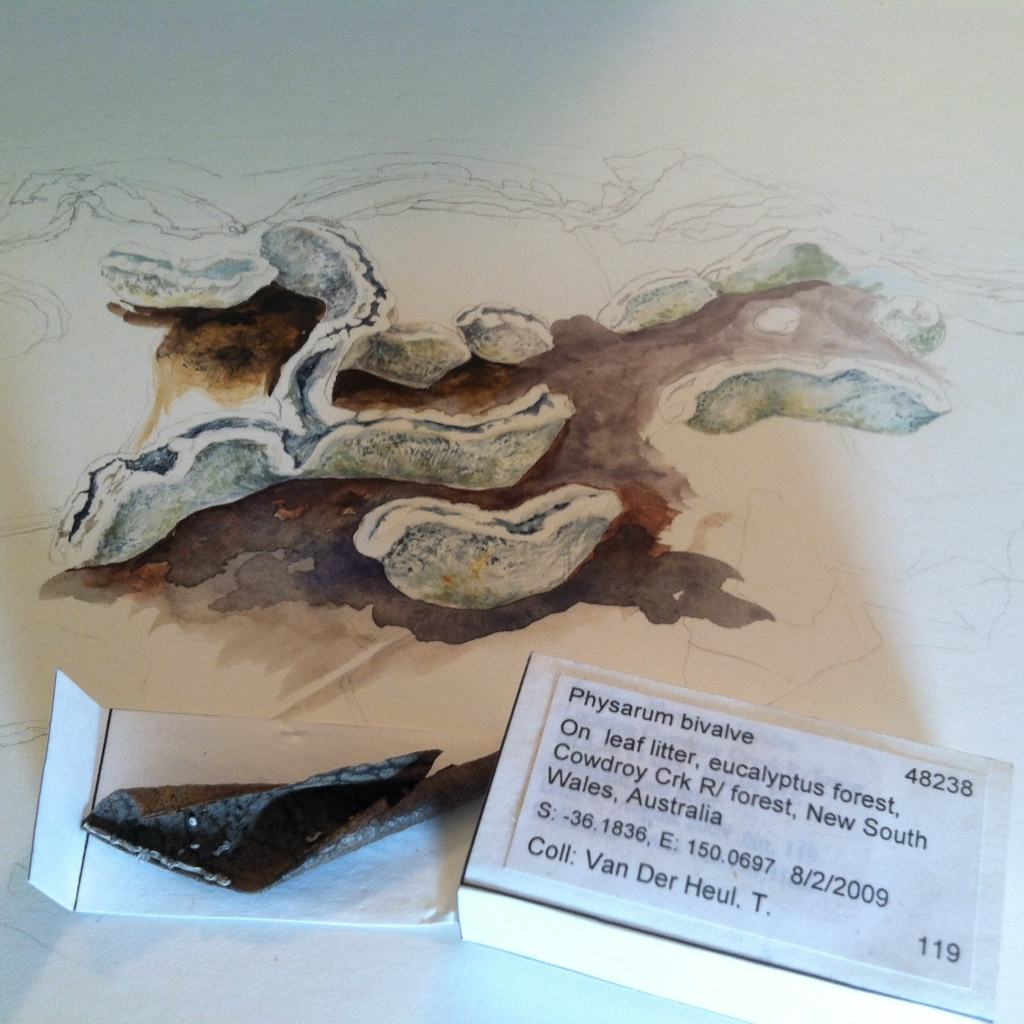 A typical matchbox-sized specimen and a watercolor in progress.