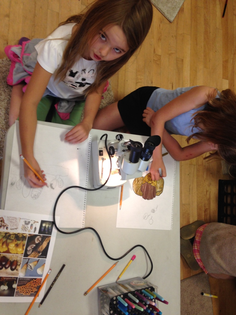 Kids at Audubon summer camp draw slime molds