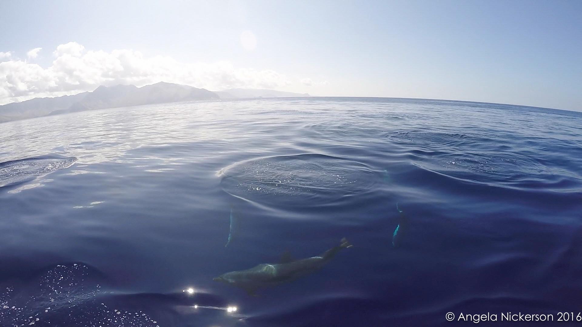 20160420-dolphin 27.jpg