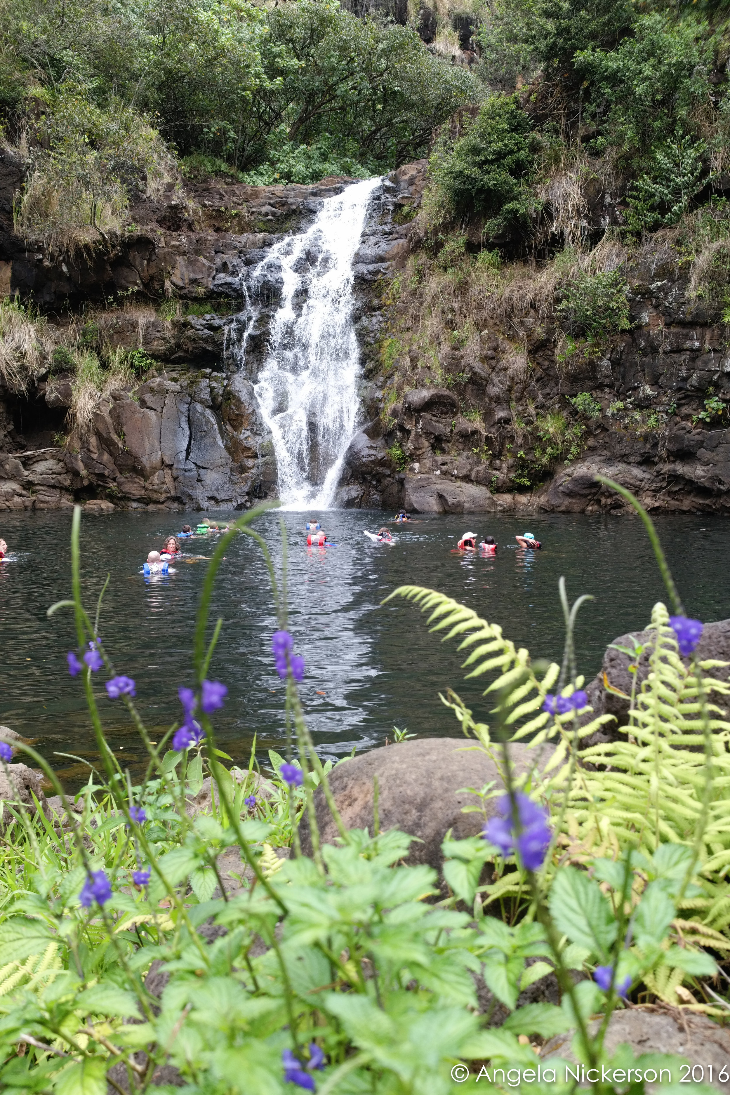 Swimming at Waimea Falls