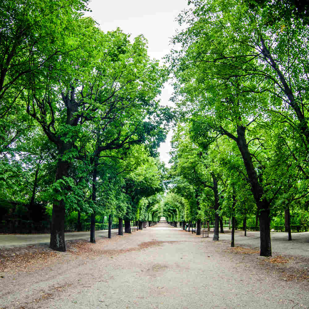 Schönbrunn-Park