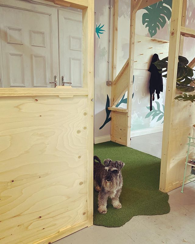 Reg adapting to life in the new office space by standing at the door and waiting to go home.  #grumpydog #officedog #designdog