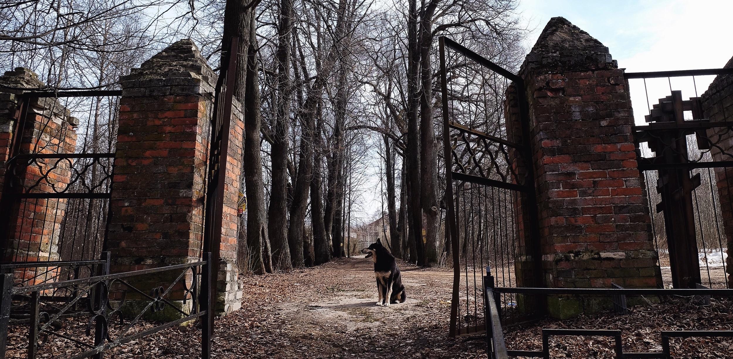 dog on cemetery.jpg