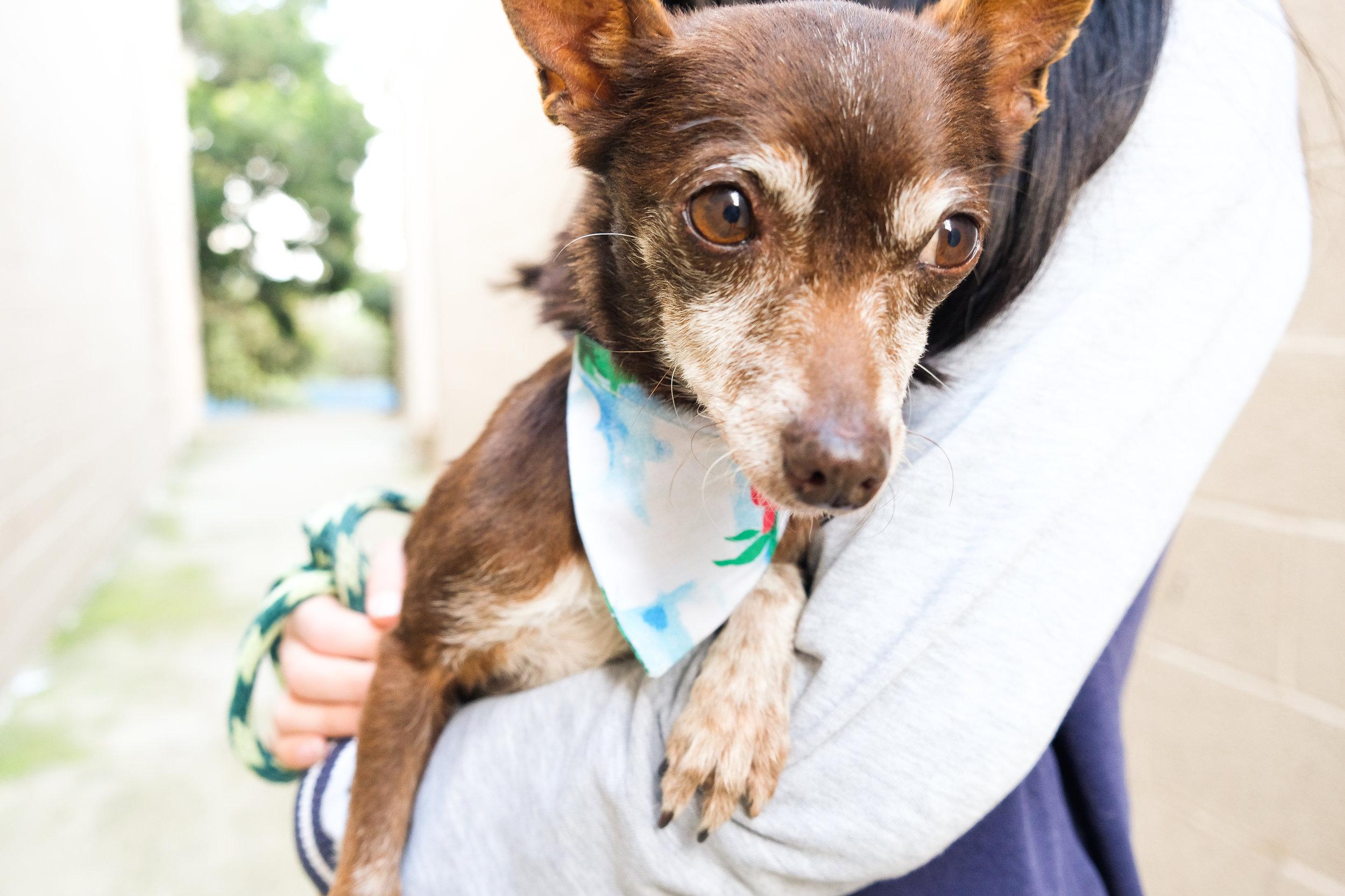 priceless-pets-rescue-portrait-02.jpg