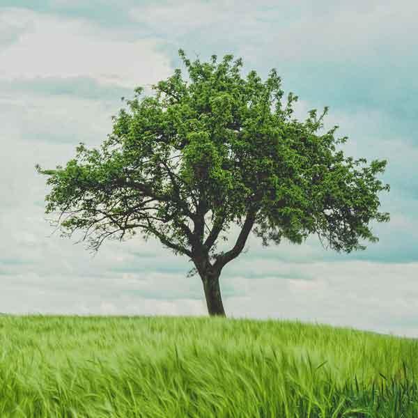 AQ-blog-tree-ayurveda.jpg