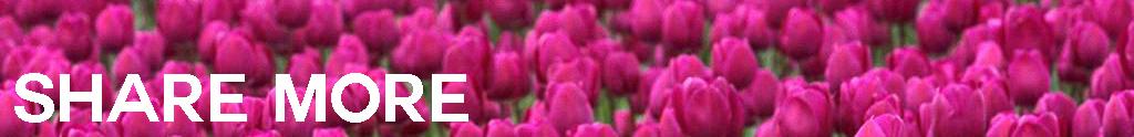 share-tulips.jpg