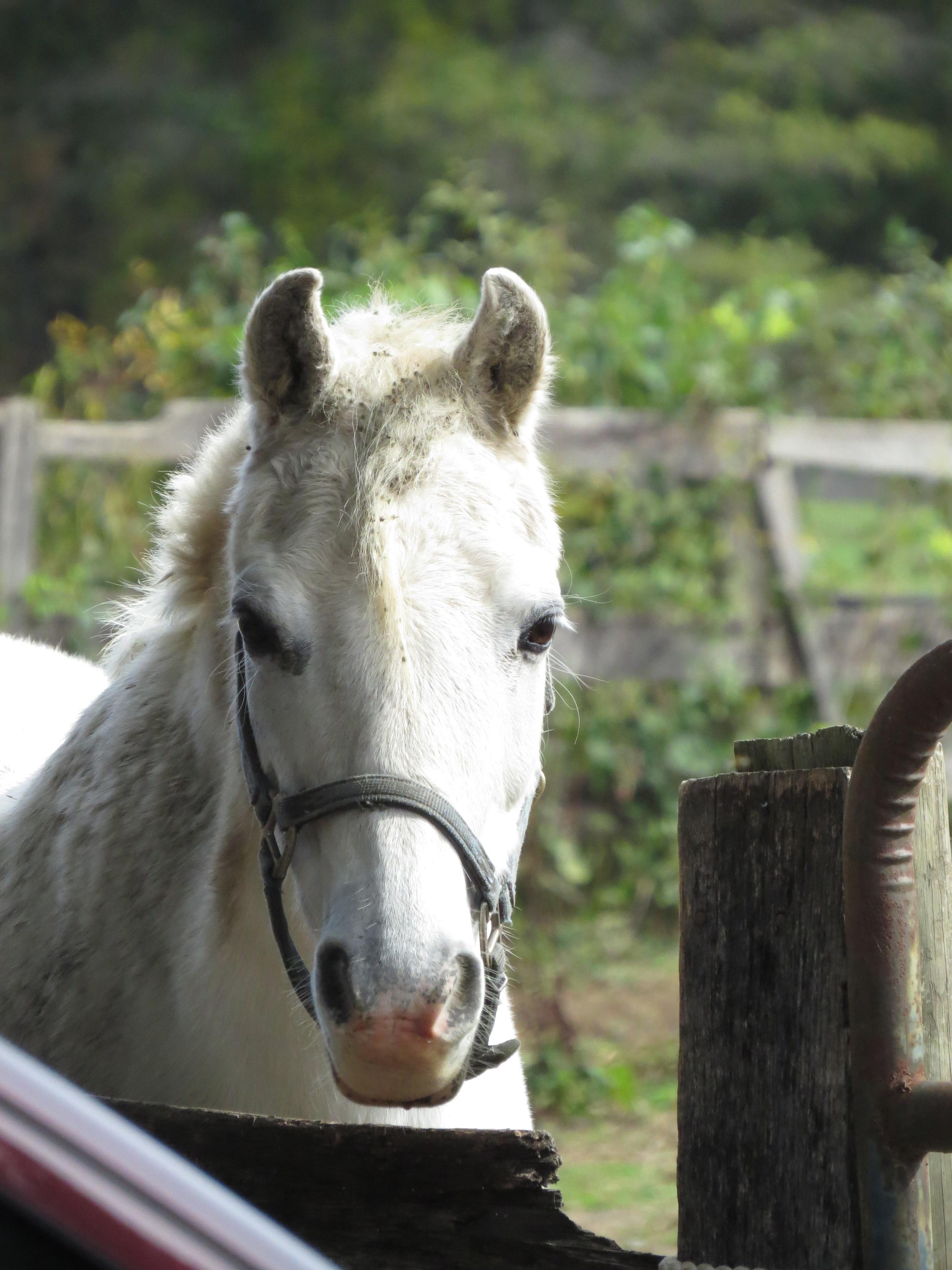 INTER-SCHOOL HORSE SHOW SERIES