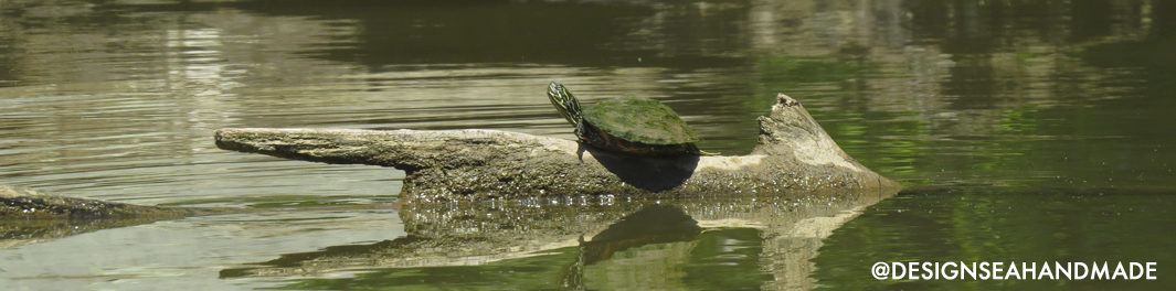Turtle kayaking outdoors maryland
