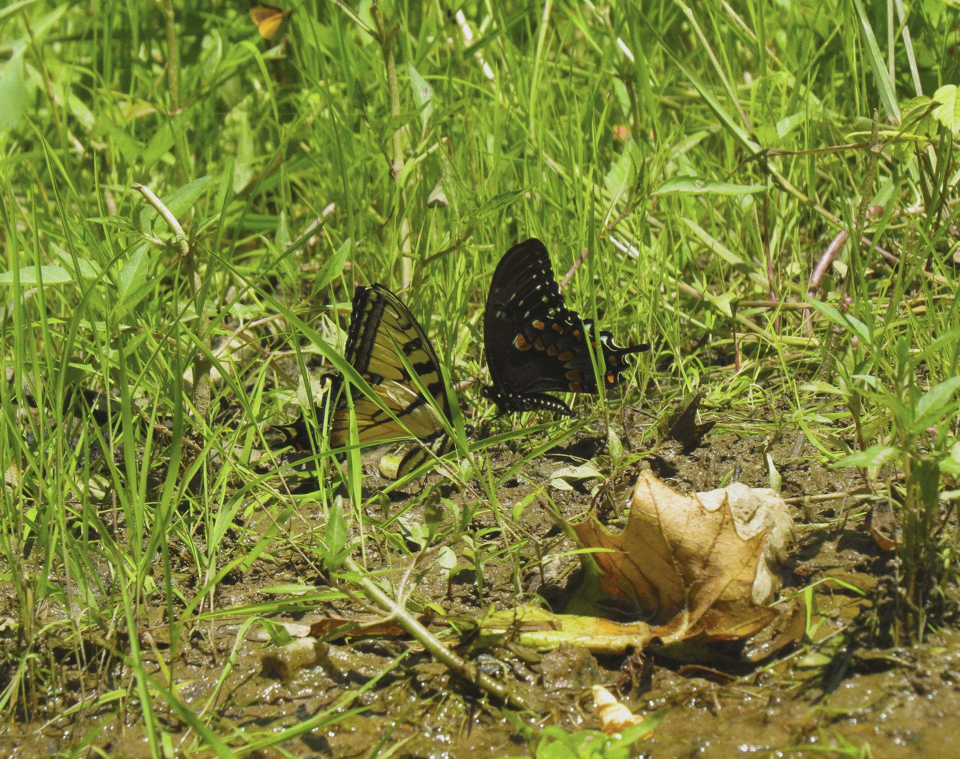 butterflies maryland nature outdoors
