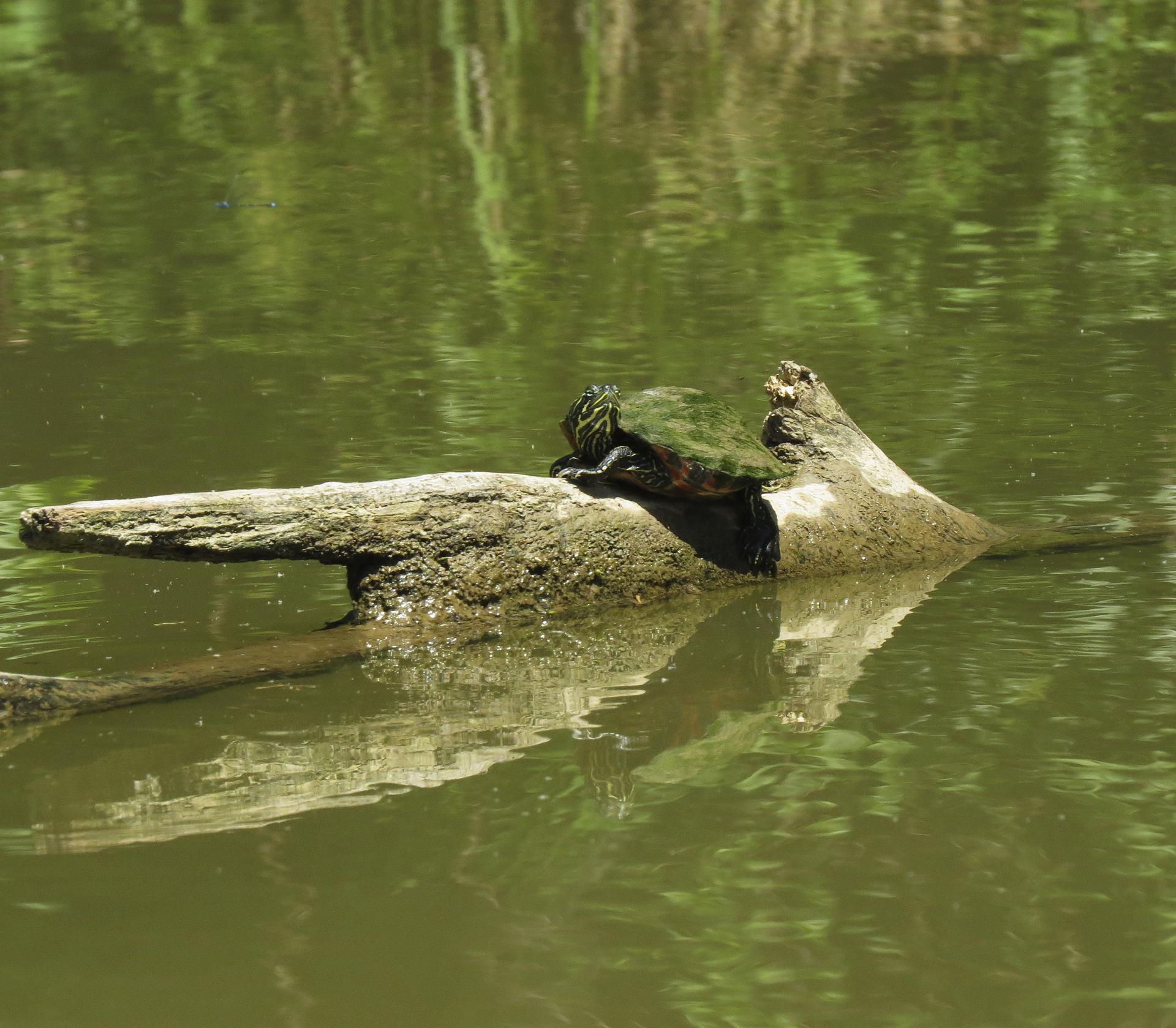 turtle river nature kayaking maryland