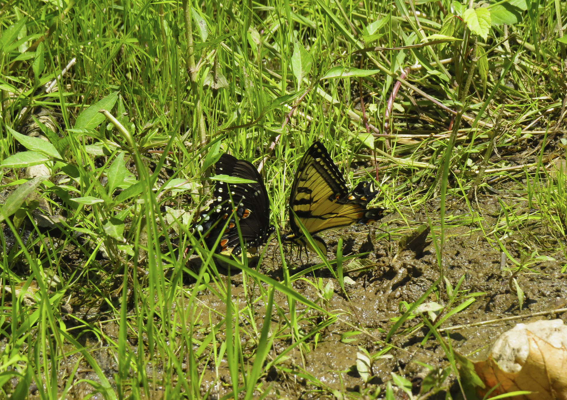 butterfly-animals-kayaking-maryland-water-nature-outdoors-c&o-canal-potomac-river