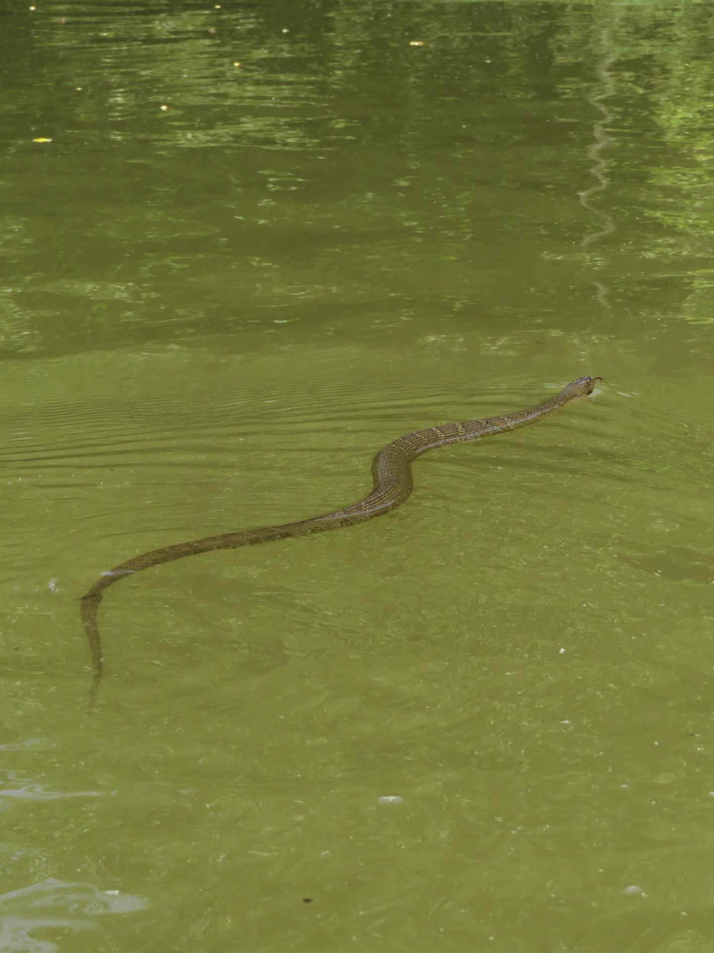 snake-kayaking-maryland-water-nature-outdoors-c&o-canal-potomac-river