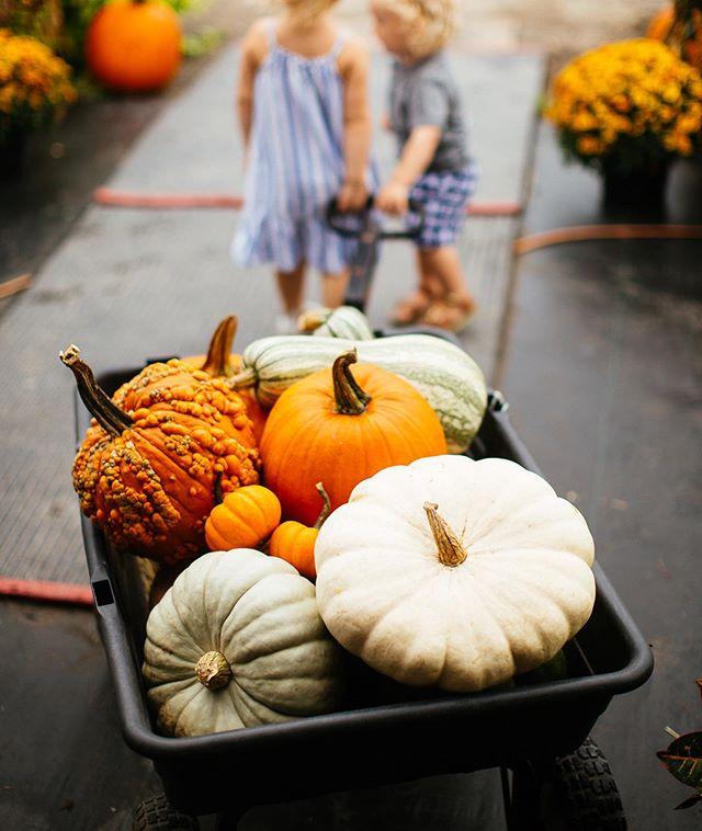 Pumpkins and cousins! #happyfallyall
