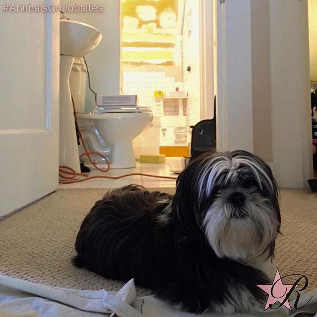I'm good. You can walk around. #tile #bathroom #rockstar #remodel #puppyoftheday