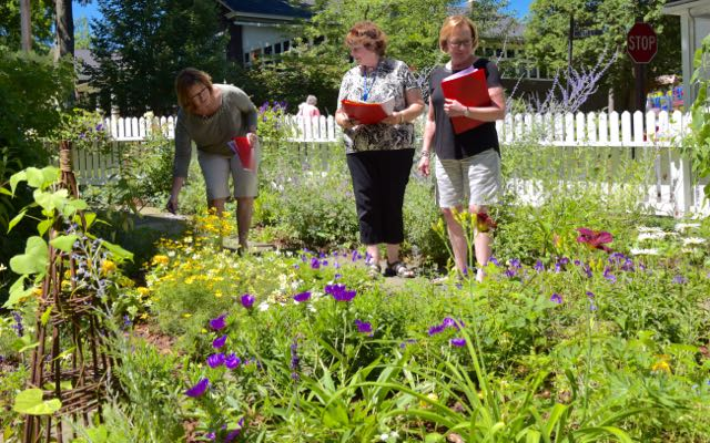 Skilled judges evaluating many criteria on this year's Chautauqua In Bloom event