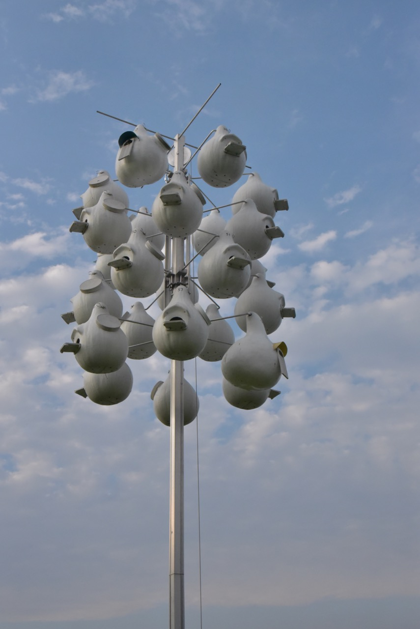 Man made gourds are an excellent alternative to the traditional Purple Martin Houses